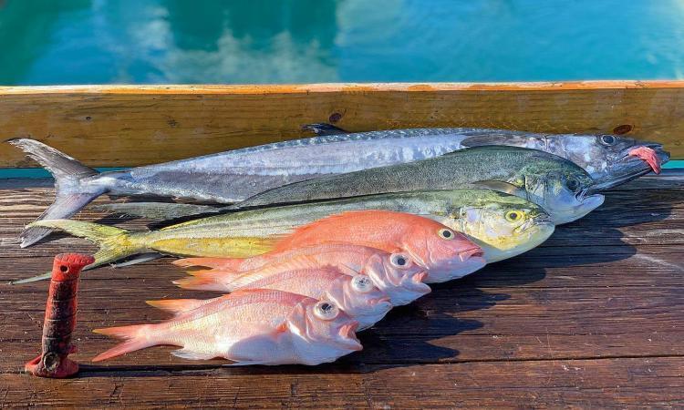 panoply fish